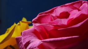Rose macra, papel pintado móvil Imagen de archivo