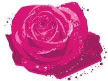 Rose magenta Images libres de droits