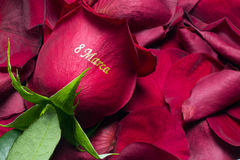 Rose March 8 Royalty Free Stock Photos
