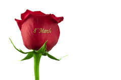 Rose March 8 Stock Photography