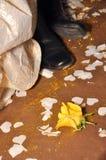 Rose, marié et mariée de jaune Photographie stock libre de droits