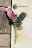Rose memorial royalty free stock image