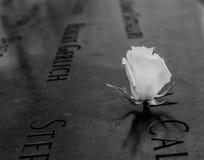 Rose Memorial bianca Fotografia Stock Libera da Diritti