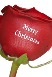 Rose with Merry Christmas written on it Royalty Free Stock Image