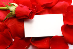 Rose and message on a petals Royalty Free Stock Photo