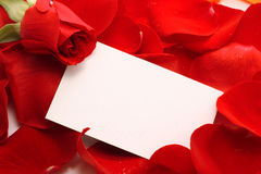 Rose and message on a petals. Background Stock Images