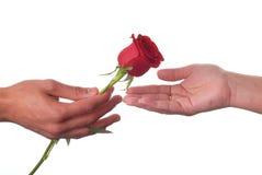 rose miłości. Zdjęcie Stock