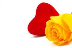 rose miłości. Fotografia Royalty Free