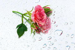 Rose on the mirror Royalty Free Stock Photography