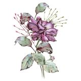 Rose mit Blättern in einem Blumenstrauß Getrennt auf weißem Hintergrund Lizenzfreie Stockfotos