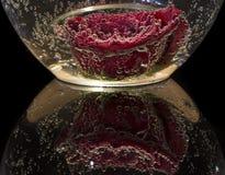 Rose mit Blasen im Wasser Stockbild