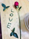 Rose mit dem Wort der Liebe Stockbild