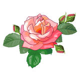 Rose mit den Knospen Lizenzfreies Stockbild