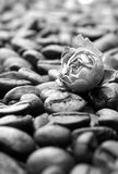 Rose mit einem Kaffee Lizenzfreie Stockfotos