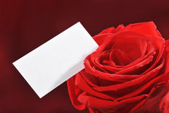 Rose mit Grußkarte Stockfoto