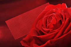 Rose mit Grußkarte Lizenzfreies Stockbild