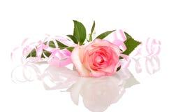 Rose mit rosa Band Valentinsgruß ` s Tag lokalisiert auf Weiß Lizenzfreies Stockbild