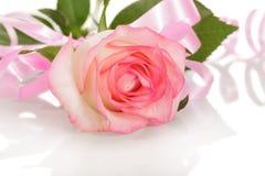 Rose mit rosa Band Valentinsgruß ` s Tagesnahaufnahme auf weißem backgrou Stockfotos
