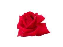 Rose mit Tautropfen Stockfoto