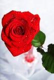 Rose mit Tropfen Stockfotografie