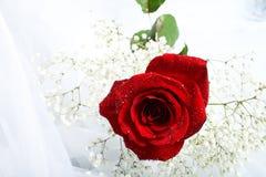 Rose mit Tropfen Lizenzfreies Stockfoto