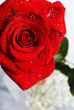 Rose mit Tropfen Lizenzfreie Stockbilder