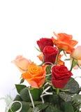 Rose mit Wassertröpfchen Stockfotografie