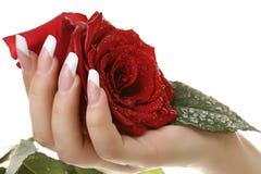 Rose mit Wassertropfen Getrennt lizenzfreies stockbild