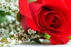 Rose mit Weiß Stockfotografie
