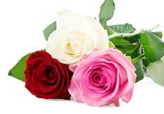 Rose Mixed Fotografia Stock
