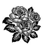 Rose motif sketch pattern. On white background Royalty Free Illustration