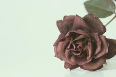 Rose muerta fotografía de archivo