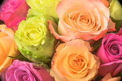 Rose multicolored bouquet stock photography