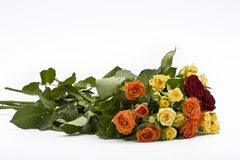 Rose multicolori fotografie stock