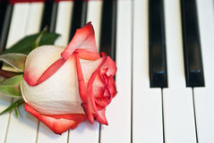 Rose and music Stock Photo