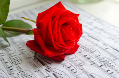 Rose and music sheet Royalty Free Stock Images