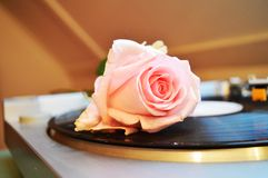 Rose and musical board stock photos