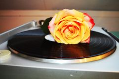 Rose and musical notes, symbols Stock Photography