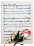 Rose on a musical paper Royalty Free Stock Image