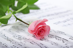 Rose on a musical paper. Closeup fresh rose with a tape on a musical paper Stock Images