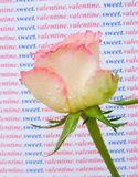 A rose for my Sweet Valentine. royalty free stock image