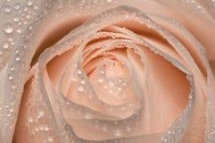 Rose nach Regen lizenzfreies stockfoto