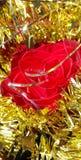 Rose naturelle de rouge de décoration de Noël avec le tisel d'or Image libre de droits