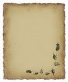 Rose negra en el pergamino viejo Imagen de archivo libre de regalías