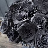 Rose nere immagine stock