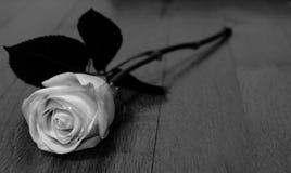 Rose noire et blanche Images stock