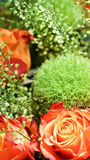 Rose nosegay. Close up of orange roses and baby's breath in nosegay stock image