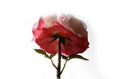 Rose Nostalgie stock fotografie