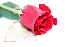 Rose with a note Stock Image