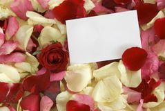 Rose and notecard Stock Photography
